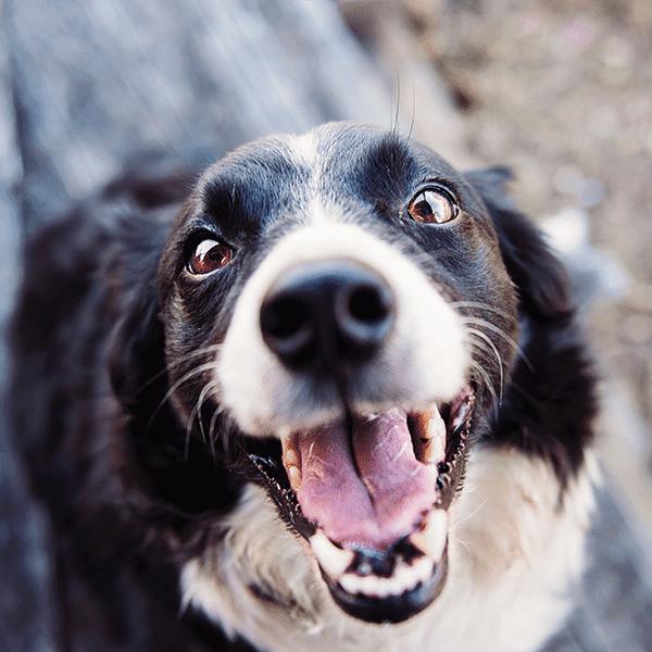 Combi Deals Hunde