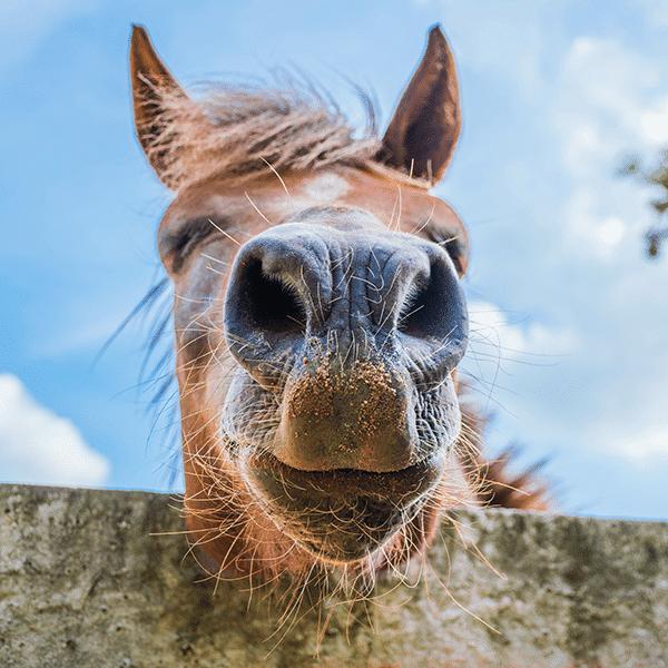 Kombi-Angebote Pferde